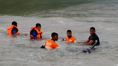 صورة بعد جنوح هائل ، أنقذت سريلانكا 120 حوتًا   سريلانكا