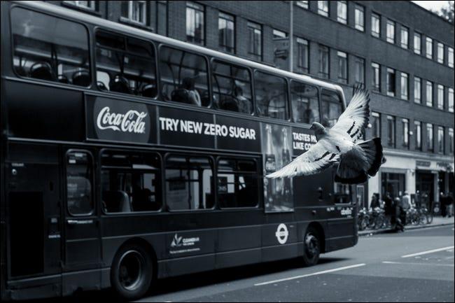 تظهر هذه الصورة الحمام أمام الحافلة ، مما يدل على عمق المجال
