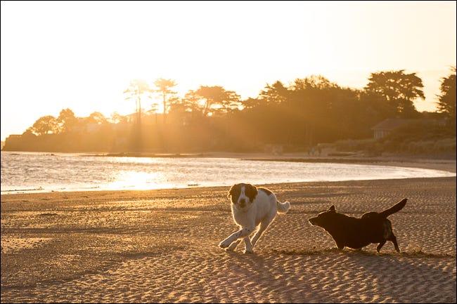 كلب يركض على الشاطئ