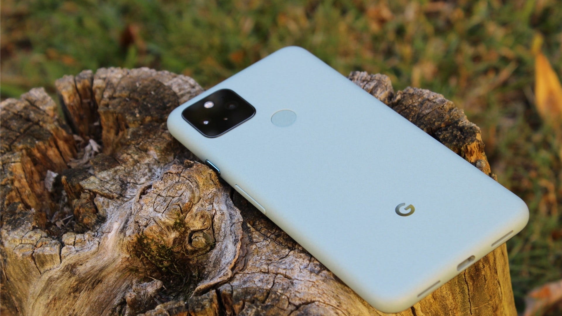 يرقد Sage Green Pixel 5 على جذع شجرة مع توجيه الشاشة لأسفل